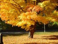 Fall_3